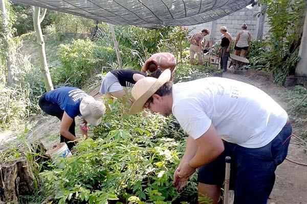 Projeto Boi Rosado Ambiental doa mudas de árvores em BH