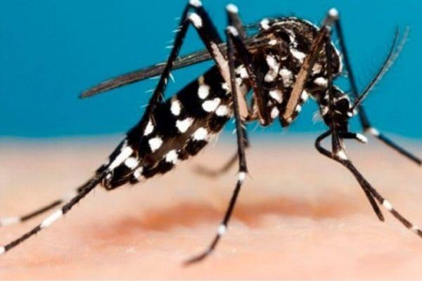 Mais duas mortes por dengue são confirmadas em Contagem