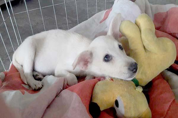Evento de adoção busca novo lar para cães e gatos