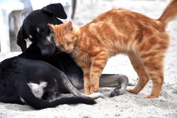 Sábado tem evento de adoção animal no Eldorado