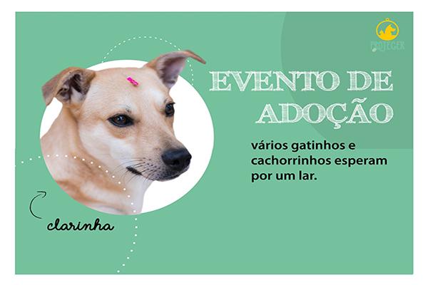 ONG Proteger promove evento de adoção no fim de semana