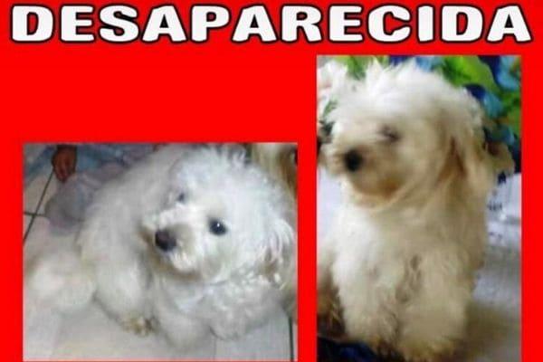 Família procura cadelinha desaparecida em Contagem
