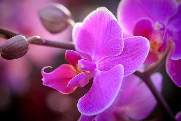 XIV Festival de Orquídeas acontece neste mês no Eldorado