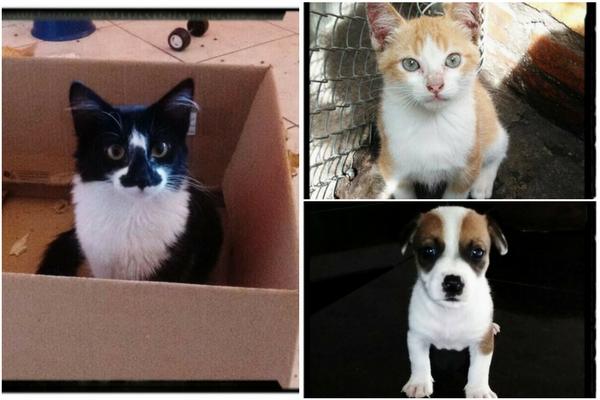 Clínica veterinária promove adoção de cães e gatos em Contagem