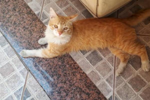 Moradora de Contagem pede ajuda para cuidar de gato resgatado
