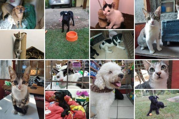 Evento de adoção reúne cães e gatos no Eldorado