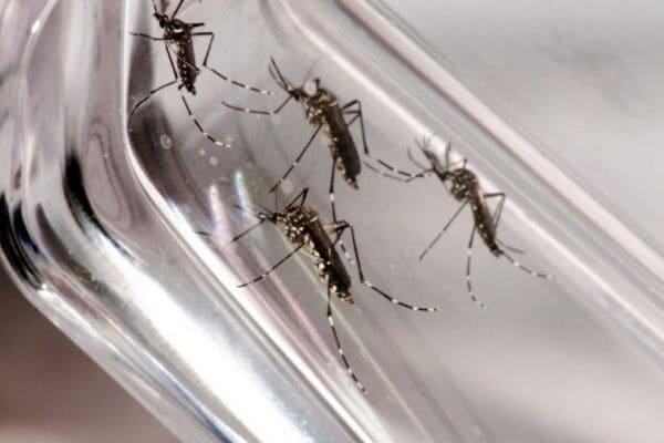 Contagem tem mais de 1.100 casos prováveis de dengue