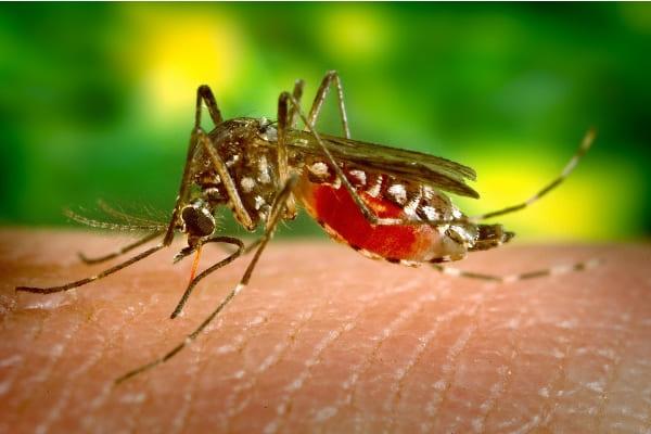 Casos prováveis de dengue passam de 16 mil em Contagem