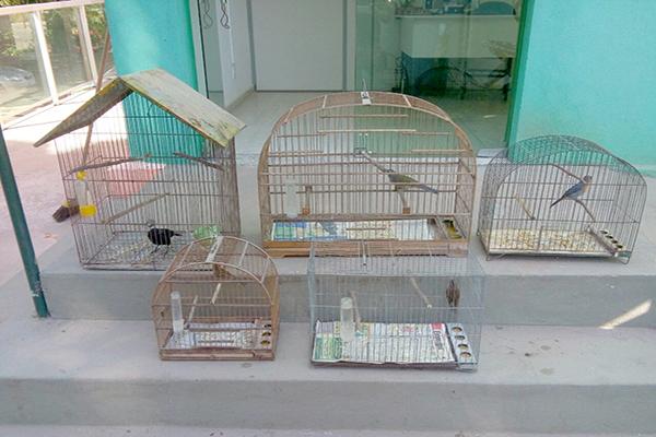 Aves silvestres são apreendidas em Contagem