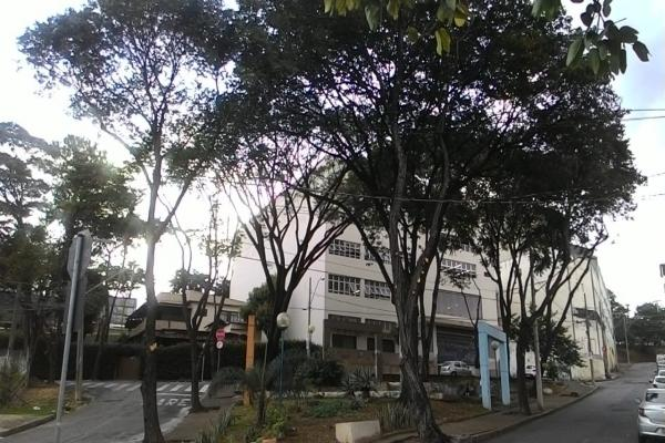 Leitor reclama de podas de árvores no bairro JK