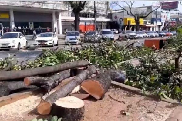 Prefeitura anuncia o plantio de 2.440 árvores em Contagem