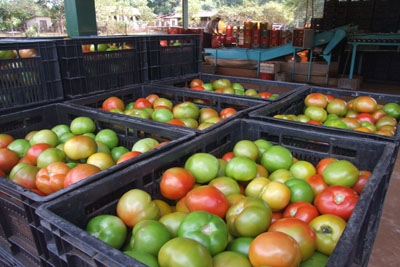 Preço de hortaliças cai 13,4% e frutas aumentam 8%.