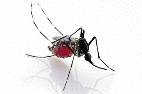 Casos prováveis de dengue sobem para 1.465 em Contagem