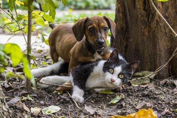Campanha busca arrecadar doações para animais e protetores