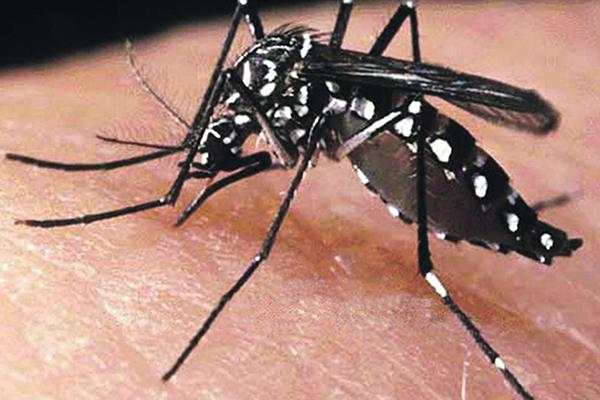 Imunidade adquirida pelo vírus da dengue pode proteger contra zika