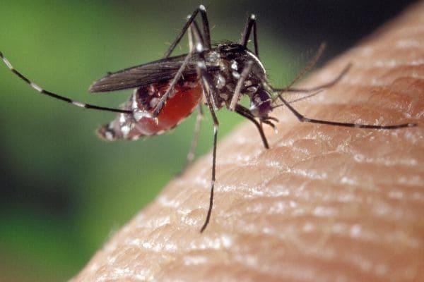 Casos de dengue desaceleram em Contagem e em Minas Gerais