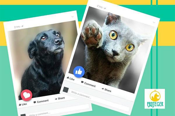 Cães e gatos estarão em evento de adoção no fim de semana