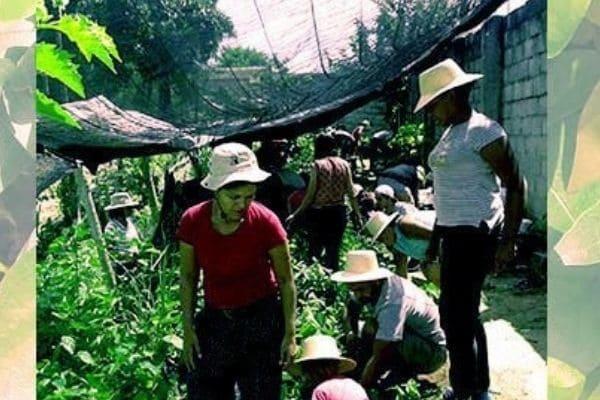 Boi Rosado Ambiental promove mutirão de produção e doação de árvores