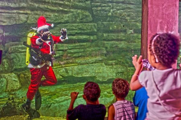 Papai Noel mergulha em aquário do rio São Francisco
