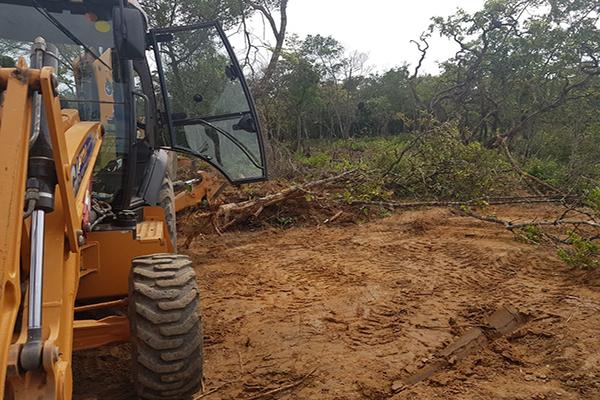 Supressão de árvores em área de proteção termina com um detido