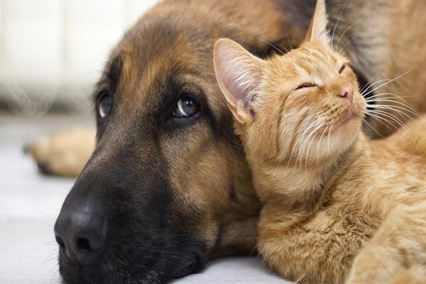Cães e gatos podem ser adotados em evento no sábado