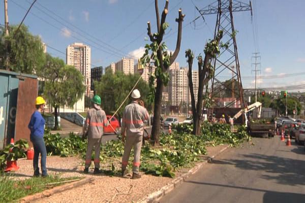 Cemig inicia cortes de 92 árvores em Contagem