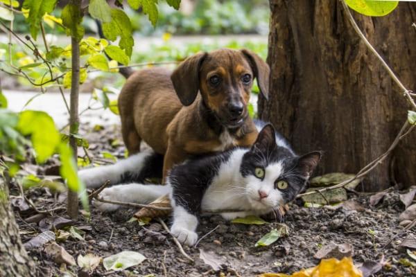 ONG Proteger promove novo evento de adoção animal