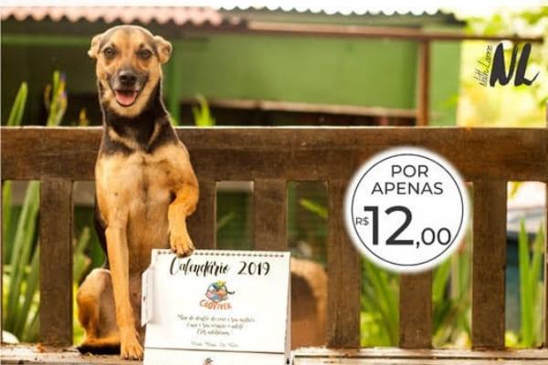 Calendários da Cão Viver estão à venda para ajudar animais