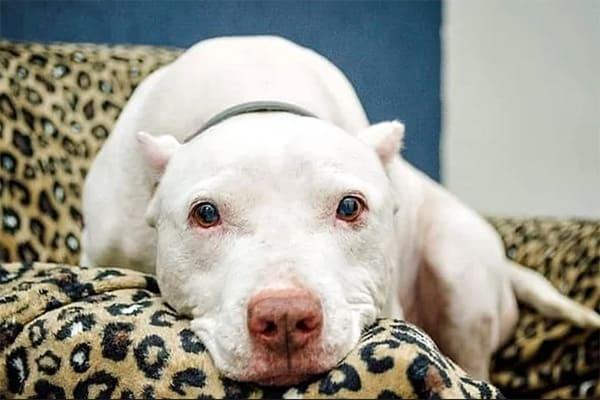 Novidades no tratamento do Natã, cão adotado