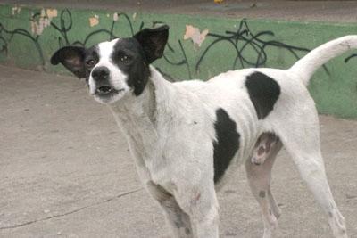 Boca no Trombone – Cães soltos nas ruas são uma ameaça à cidade