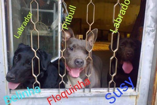 Três cadelas são procuradas após fuga em Contagem