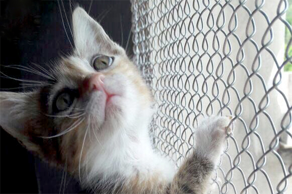 Evento de adoção tem gatos adultos e filhotes