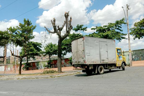 Podas deixam árvores quase sem folhagem no Cidade Industrial