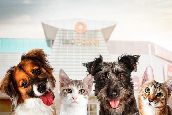 Evento de adoção reúne cães e gatos à espera de um lar