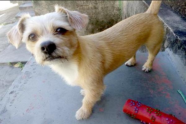 Tutores oferecem recompensa a quem localizar cão desaparecido
