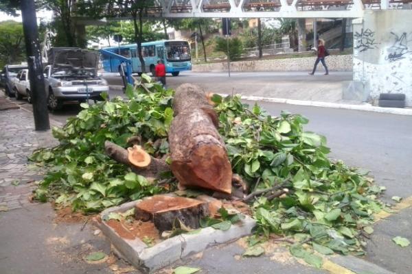 Podas radicais mutilam árvores em Contagem