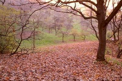 Dias típicos de outono