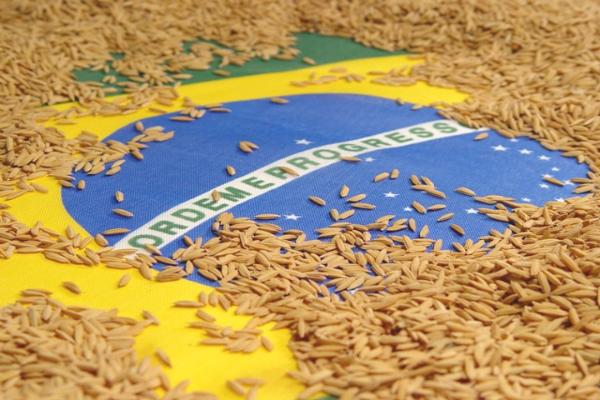 Preço do arroz também sobe e refeição básica pesa no bolso do consumidor