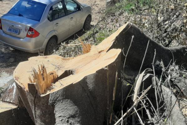 Movimento SOS Vargem das Flores denuncia corte de árvores