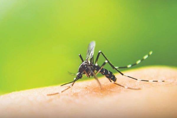 Contagem já registrou mais de 31 mil casos de dengue