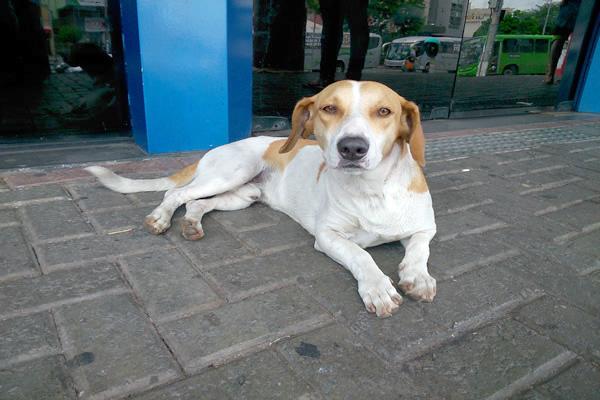 Cão de rua busca abrigo na Caixa