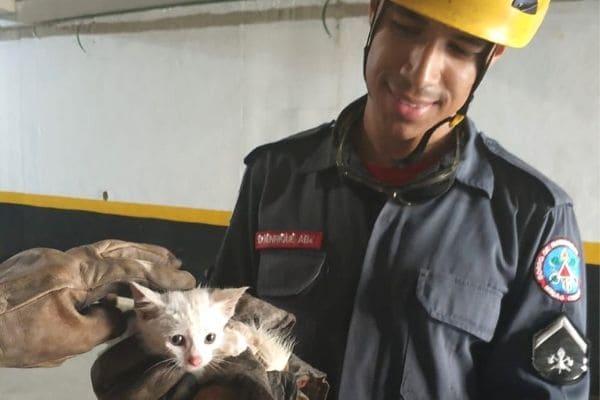 Bombeiros salvam gato preso em tubulação de condomínio