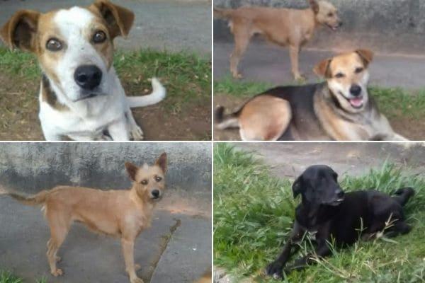 Moradores pedem ajuda para cães que vivem em rua do bairro Arvoredo