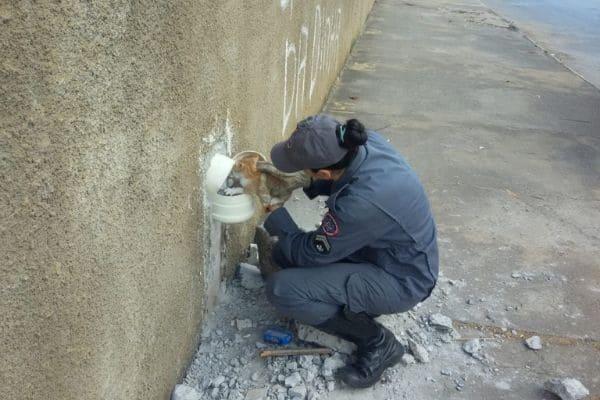 Bombeiros resgatam gato em tubulação de água