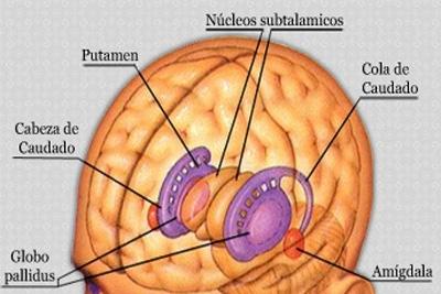 Pesquisadores revelam associações entre amígdala e sociabilidade