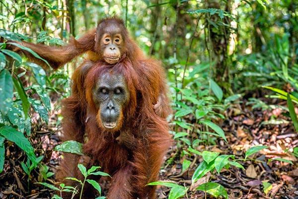 População de animais das Américas Central e do Sul caiu 89%
