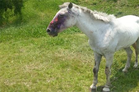 Cavalo é vítima de maus tratos