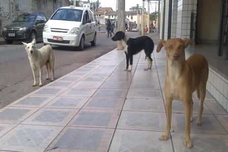 O número de cães abandonados continua crescendo