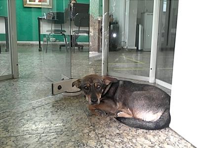 Dia de cão abandonado