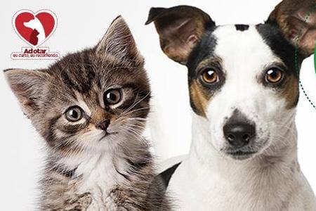 Big Shopping promove feira de adoção de animais no próximo domingo (26)